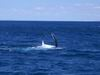 diego_whale_watching_001.